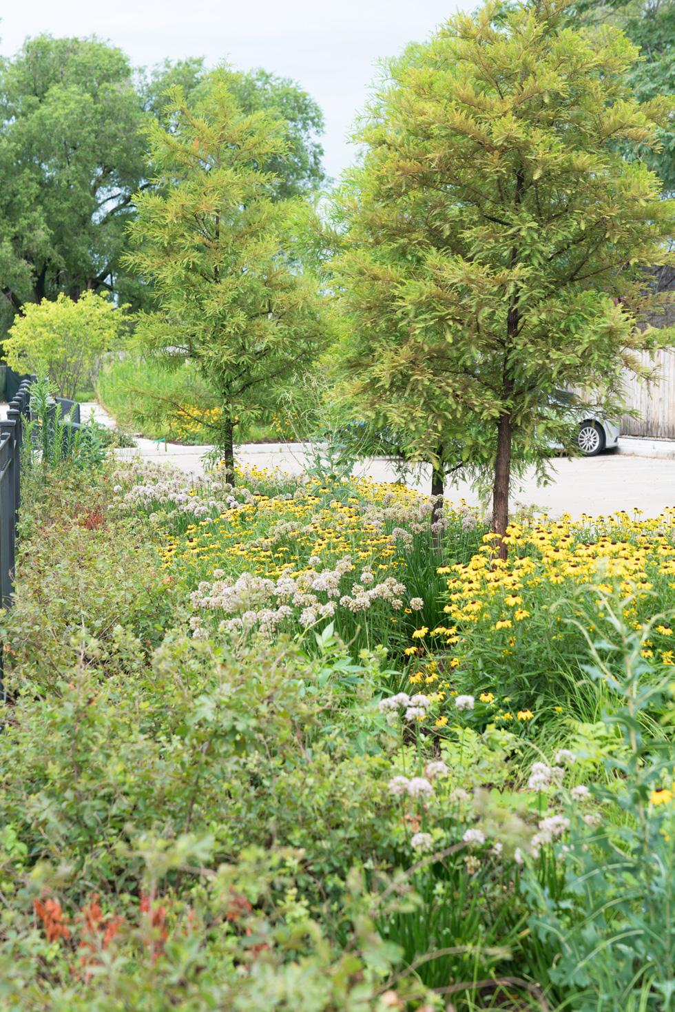 Casa queretaro pilsen chicago affordable housing for Garden design group